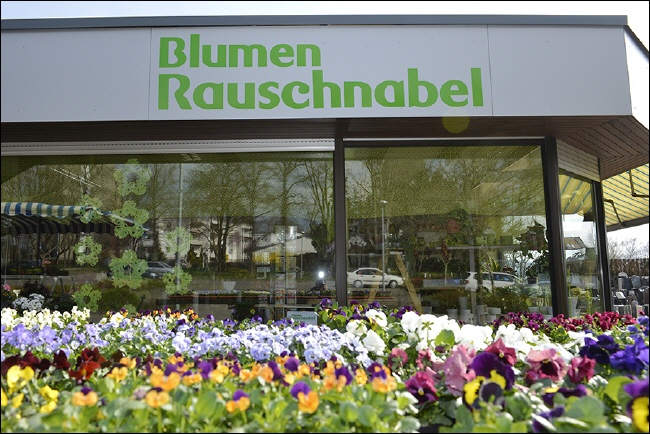 Balkonpflanzen märz  Gärtnerei Frieder Rauschnabel